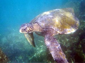 Galapagos 2002 Elizabeth Bay